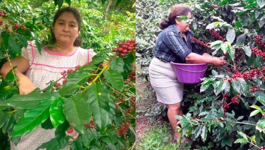 Infobae destacó a Elvia Monzón, la guatemalteca que abrió paso a mujeres en cultivo de café