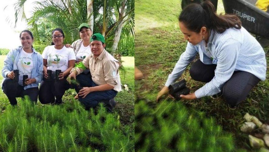 Movimiento de jóvenes Plantemos busca voluntarios guatemaltecos para actividades en el 2021