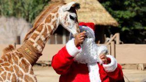 Tour de entrega de regalos a los animales del Zoológico La Aurora | Diciembre 2020
