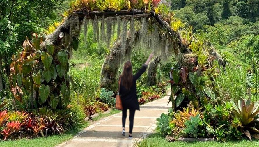 Tour gratuito de orquídeas en la Ciudad de Guatemala Diciembre 2020
