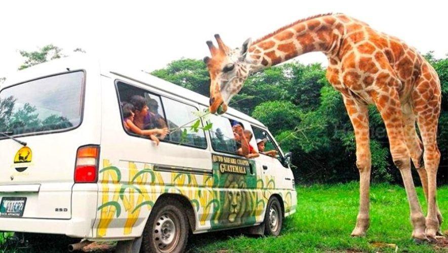 Viaje para visitar el Auto Safari Chapín | Enero 2021