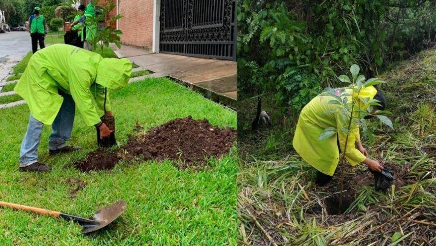 Centros de acopio donde puedes llevar tus árboles de Navidad y transformarlos en abono