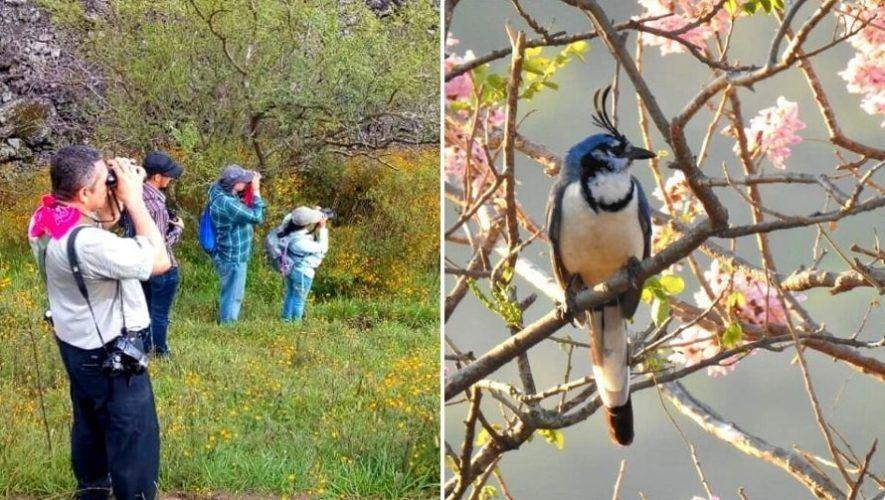 Cursos para los amantes de las aves en Guatemala   Abril 2021