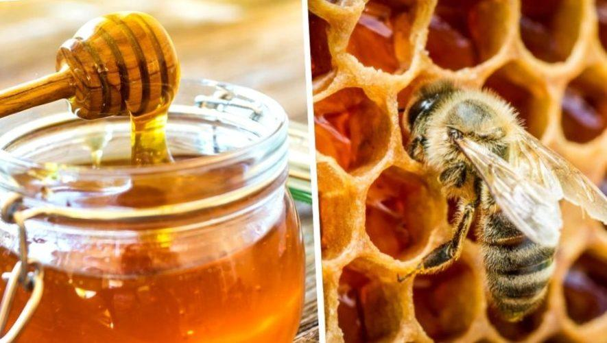 Taller para aprender a cosechar miel y tener una colmena   Enero 2021