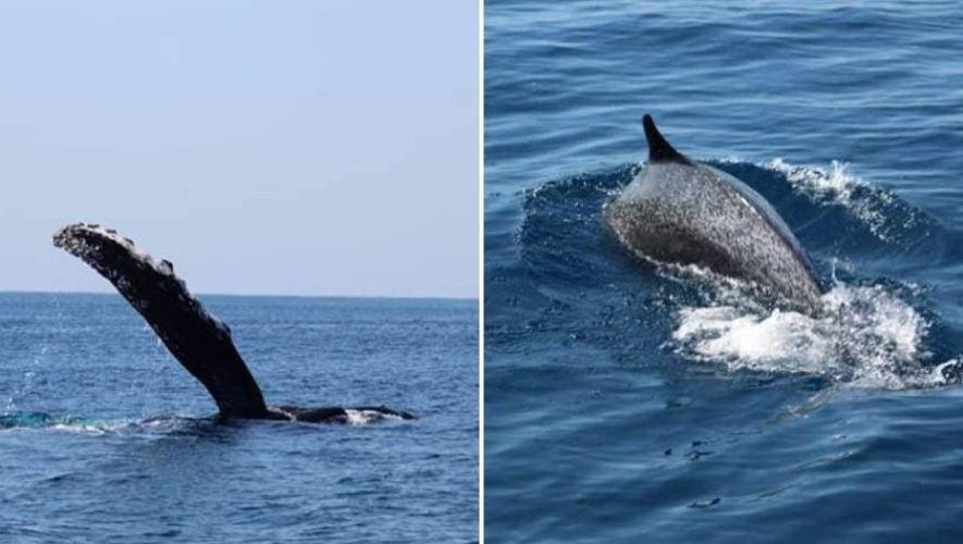 Viaje de avistamiento de ballenas en playa Las Lisas, Santa Rosa | Enero 2021
