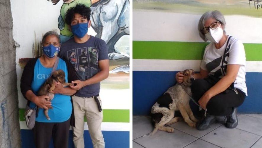 albergue-municipal-mascotas-mixco-invita-guatemaltecos-adoptar-perritos