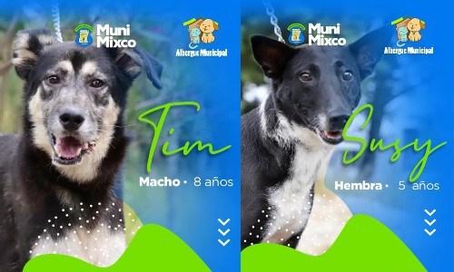 albergue-municipal-mascotas-mixco-invita-guatemaltecos-adoptar-perritos-catalogo-1