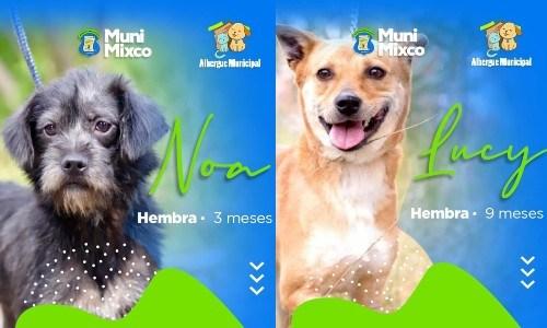 albergue-municipal-mascotas-mixco-invita-guatemaltecos-adoptar-perritos-catalogo-2