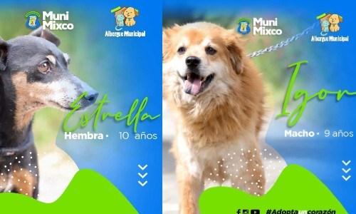 albergue-municipal-mascotas-mixco-invita-guatemaltecos-adoptar-perritos-catalogo-3