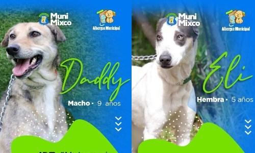 albergue-municipal-mascotas-mixco-invita-guatemaltecos-adoptar-perritos-catalogo-4