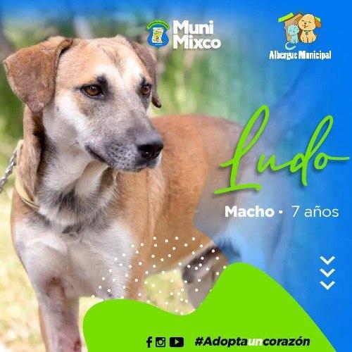 albergue-municipal-mascotas-mixco-invita-guatemaltecos-adoptar-perritos-catalogo-5