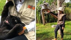 convocatoria-guatemaltecos-quieran-ser-voluntarios-zoologico-aurora