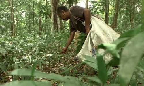 guatemala-incluida-100-avances-politicas-climaticas-apolitical-concesiones-forestales-comunitarias-personas-indigenas