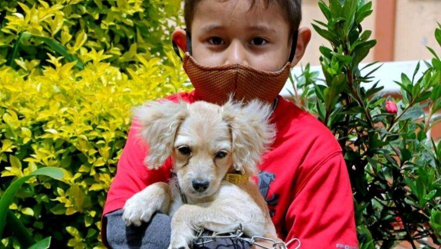 Jornadas de esterilización de mascotas a bajo costo, Santa Catarina Pinula | Febrero 2021