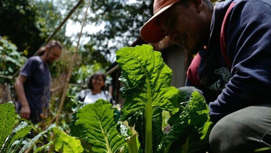 Taller de huertos urbanos en Antigua Guatemala | Febrero 2021
