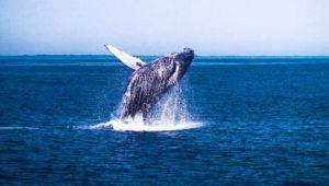 Viajes de avistamiento de ballenas en Guatemala | Febrero 2021