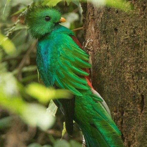 bbc-mundo-compartio-foto-quetzal-hecha-guatemalteca-cindy-lorenzo-macho
