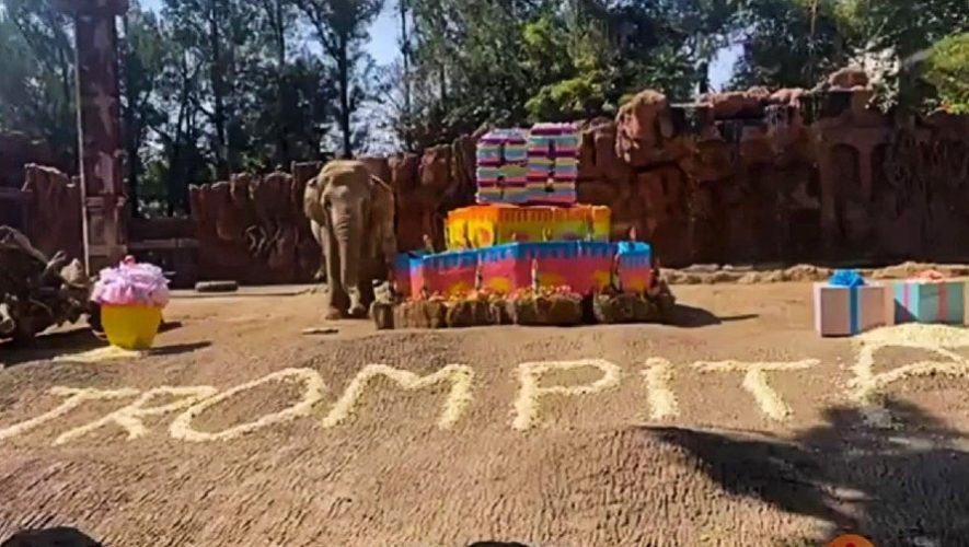 trompita-elefante-zoologico-aurora-festejada-60-anos-edad