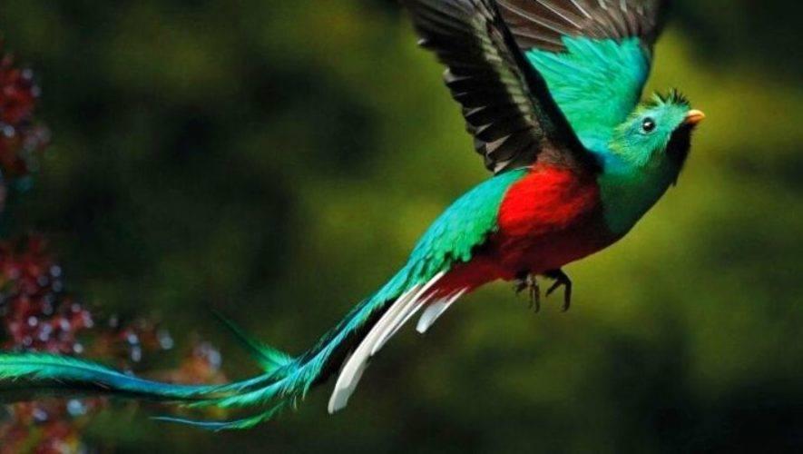 Feria de observación de aves en Antigua Guatemala | Abril 2021