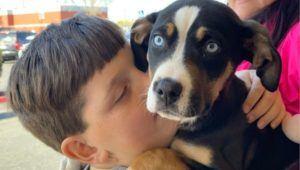 Festival de adopciones de mascotas en Antigua Guatemala | Abril 2021