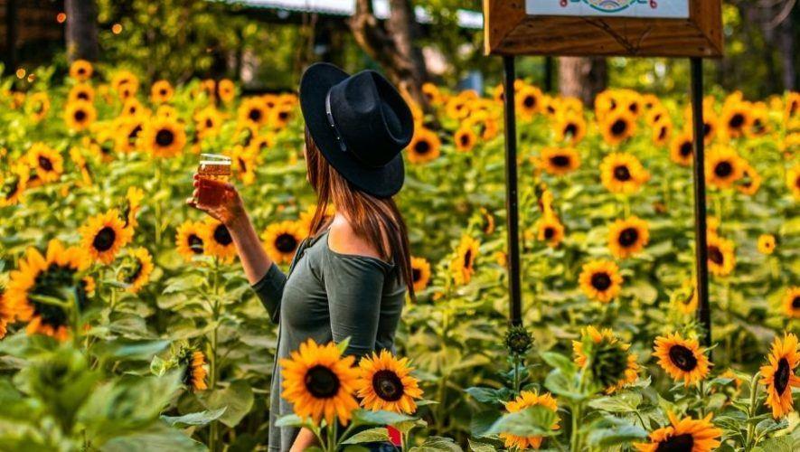 Siembra de girasoles y taller de abejas en Antigua Guatemala   Marzo 2021
