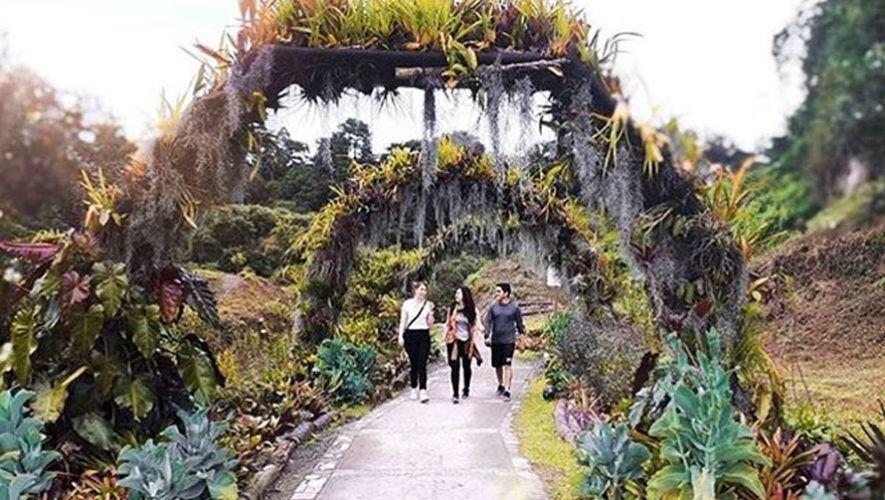 Tour gratuito de orquídeas en la Ciudad de Guatemala | Marzo 2021