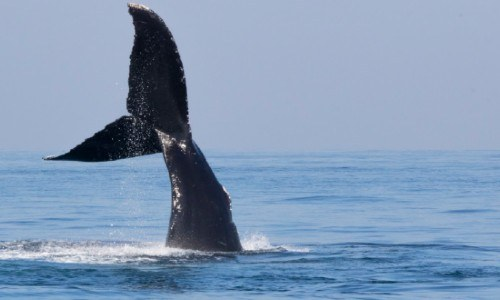 avistamiento de ballenas en guatemala 2021