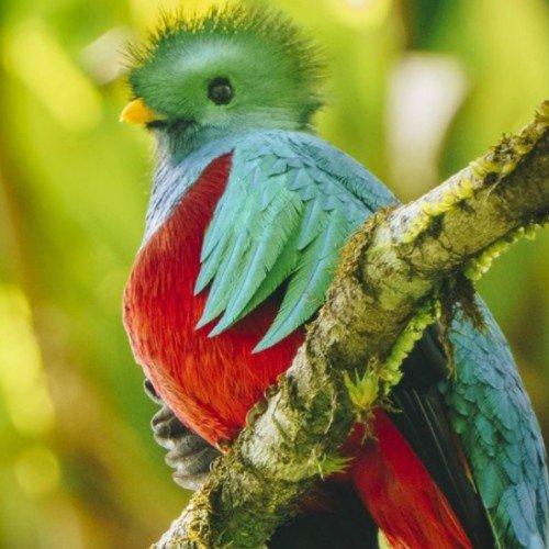 fotografia-guatemalteco-haniel-lopez-elegida-tufotonatgeo-febrero-2021-ranchitos-quetzal-purulha-baja-verapaz