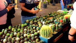 Exposición de plantas exóticas y carnívoras en Antigua Guatemala | Abril - Mayo 2021