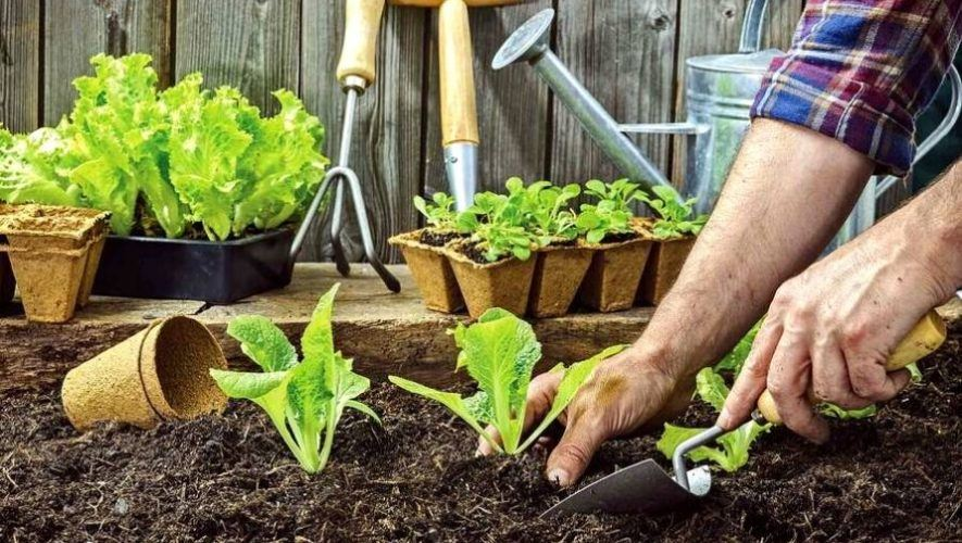 Taller gratuito para crear un huerto ecológico | Abril 2021