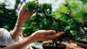Taller gratuito para sembrar y cultivar un bonsai | Abril 2021