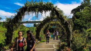 Tour gratuito de orquídeas en el parque ecológico La Asunción | Abril 2021