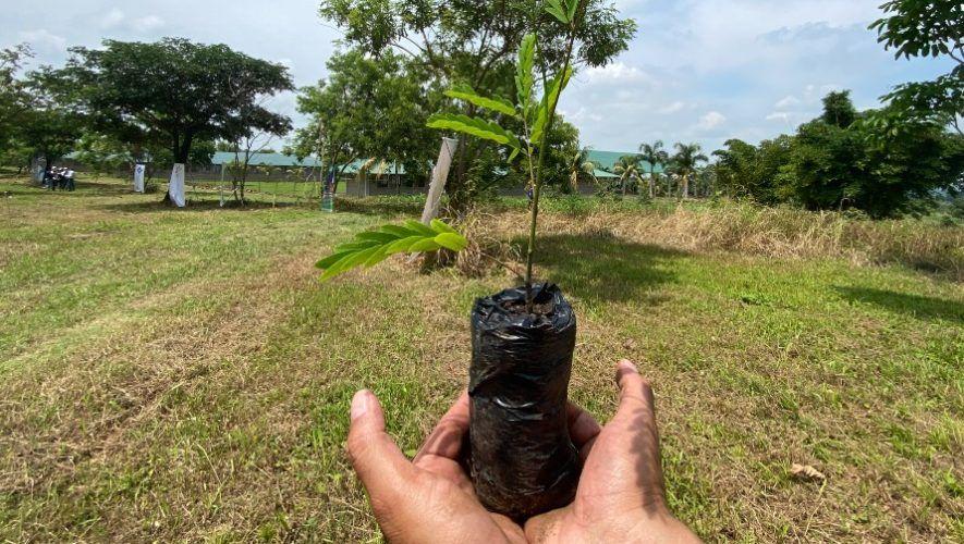 Asazgua impulsa plan de reforestación de 900 mil árboles que serán sembrados en 2021