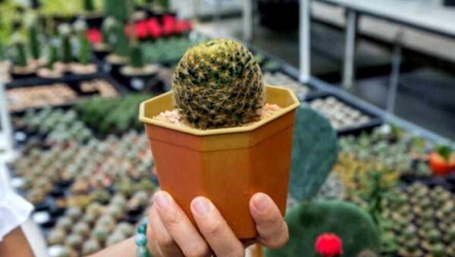 Exposición de cactus y suculentas en Quetzaltenango | Mayo 2021