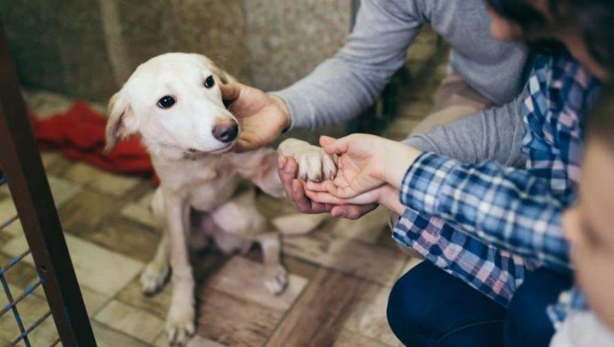Feria de adopciones de mascotas, Sumpango Sacatepéquez | Junio 2021