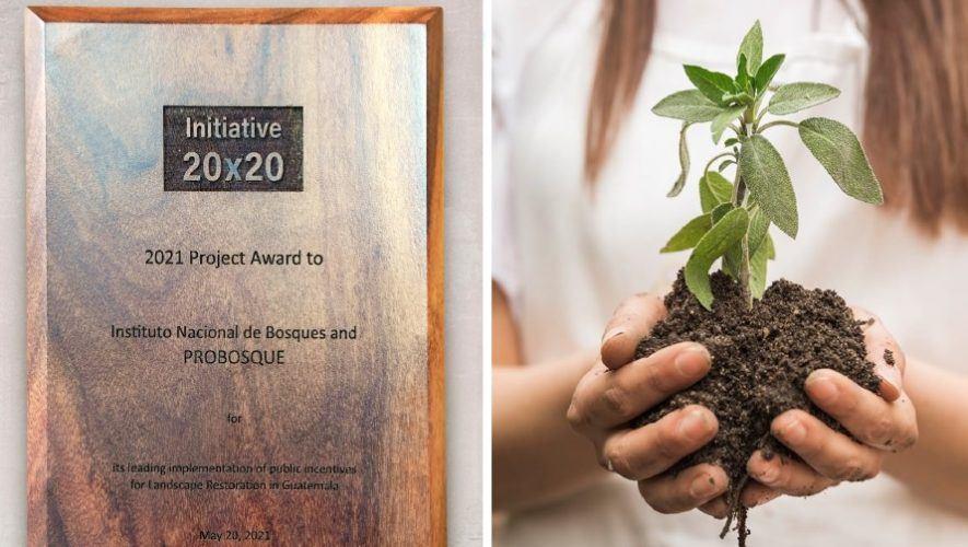 Guatemala fue reconocida con el premio Iniciativa 20x20 por sus incentivos forestales Probosque