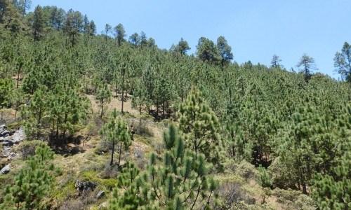 Iniciativa 20x20 bosques de guatemala