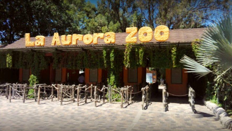 Jornada de reciclaje en el Zoológico La Aurora   Mayo 2021