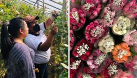 Miles de docenas de rosas de floricultores sanjuaneros serán exportadas a Estados Unidos