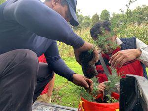 Plantemos inauguró proyecto Bosque Bicentenario plantando 20,000 árboles_