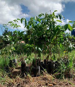 Plantemos inauguró proyecto Bosque Bicentenario plantando 20,000 árboles