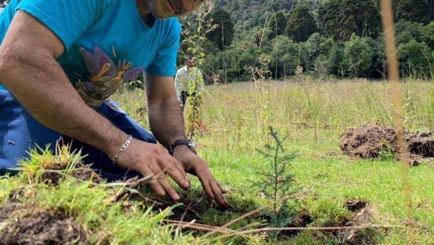 Plantemos inauguró proyecto Bosque Bicentenario plantando 20,000 árboles.