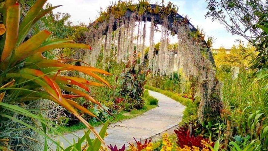 Tour gratuito de orquídeas en un parque ecológico de la Ciudad de Guatemala | Mayo 2021