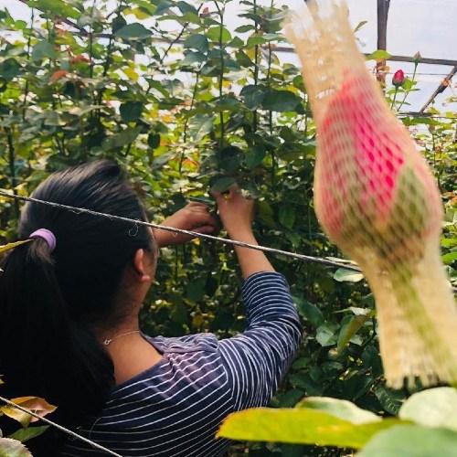 pequeños productores san juan sacatepequez tierra de flores