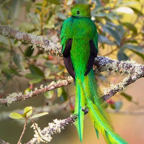 quetzal ave nacional fly frontier airlines