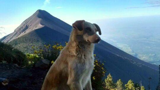 tarzan-perro-acompana-montanistas-volcan-acatenango