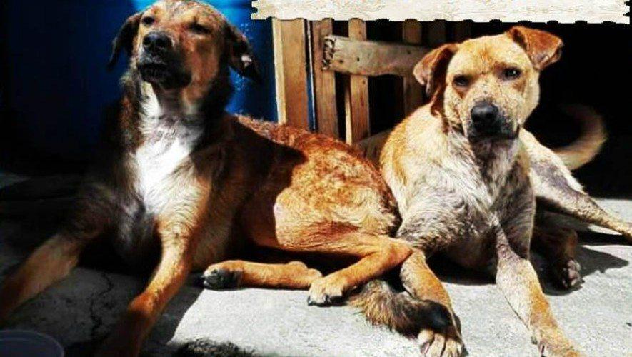 Abrazo-Animal-Guatemla-rescata perros