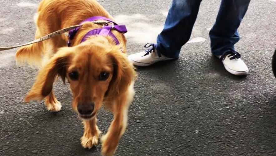 Adopta-una-mascota