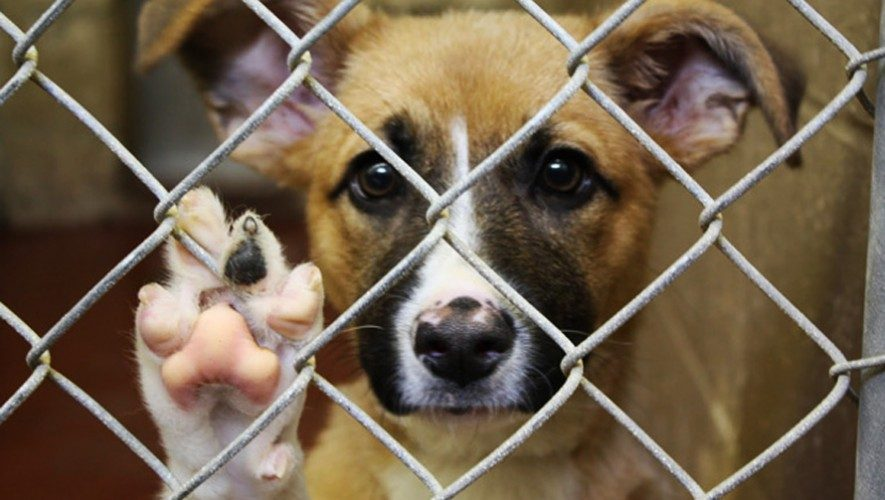 Asociaciones de rescate de perros callejeros Guatemala