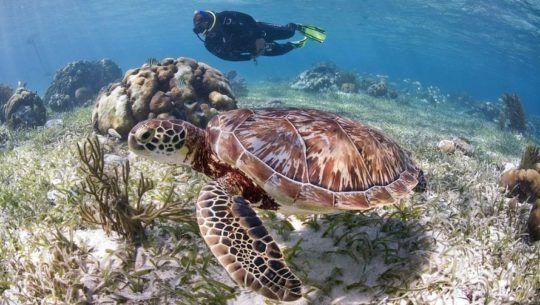 El arrecife mesoamericano ubicado en Izabal